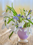 Beautiful bouquet of snowdrops in vase Stock Photos