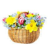 Beautiful Bouquet of  Spring Flowers into Basket on white backgr Royalty Free Stock Photos
