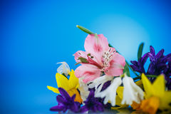 Beautiful bouquet of spring flowers Royalty Free Stock Images