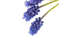 Beautiful bouquet of spring flowers Stock Images