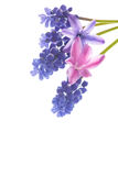 Beautiful bouquet of spring flowers Royalty Free Stock Photo