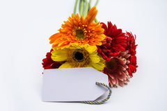 Beautiful bouquet of spring flowers on a white background Royalty Free Stock Images