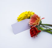 Beautiful bouquet of spring flowers on a white background Royalty Free Stock Photos