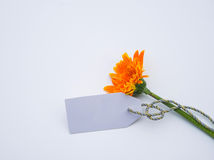 Beautiful bouquet of spring flowers on a white background Stock Photography