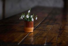 Beautiful bouquet of spring snowdrops in a clay vase on a wooden table stock image