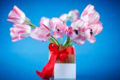 Beautiful bouquet of spring tulips Royalty Free Stock Photos