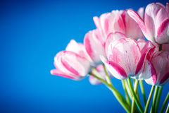 Beautiful bouquet of spring tulips Stock Photos