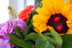 Beautiful bouquet of summer flowers Stock Images