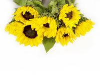 Bouquet of sunflowers Stock Photography