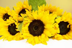 Bouquet of sunflowers on a white background Royalty Free Stock Photography