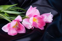 Beautiful bouquet of tender pink tulips lying on black satin fab Royalty Free Stock Image