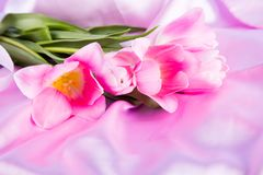 Beautiful bouquet of tender pink tulips lying on pink satin fabr Royalty Free Stock Image