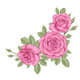 Beautiful bouquet with three pink roses and leaves. Floral arrangement. Design greeting card and invitation of the wedding, birthday, Valentine`s Day, mother`s Stock Image