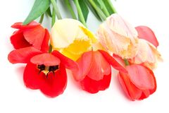 Beautiful bouquet of tulips Stock Photography