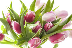Beautiful bouquet tulips Stock Photos