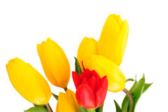 Beautiful bouquet of tulips Royalty Free Stock Image