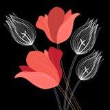 Beautiful bouquet of tulips Stock Image
