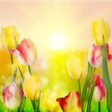 Beautiful bouquet of tulips. EPS 10 Royalty Free Stock Photos