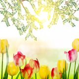 Beautiful bouquet of tulips. EPS 10 Royalty Free Stock Image