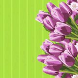 Beautiful bouquet of tulips, floral background. Royalty Free Stock Photos