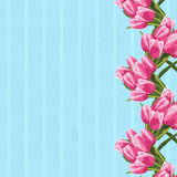 Beautiful bouquet of tulips, floral background. Stock Images