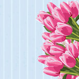 Beautiful bouquet of tulips, floral background. Stock Photography