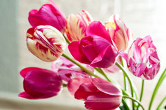 Beautiful bouquet of tulips for greeting card Royalty Free Stock Images