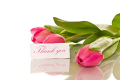 Beautiful bouquet of tulips Stock Photo