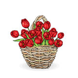A beautiful bouquet of tulips in a wicker basket. Vector illustration. Spring holiday. Postcard from 8 March or Easter. Stock Photography