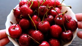 Beautiful bouquet of wet cherries close-up. Fresh ripe red berries, stems and drops of water. Selective focus.  stock video footage