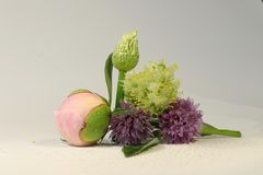 A beautiful bouquet on the white background contain peony, chives and some onion. A beautiful bouquet on the white background contain peony, chives and some kind stock photography