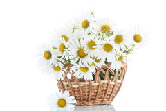 Beautiful bouquet of white daisies