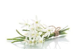 Beautiful bouquet of white flowers Stock Photography
