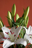 Beautiful bouquet of white lilies Stock Photography