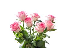 Beautiful bouquet of white roses with a pink border Royalty Free Stock Photo