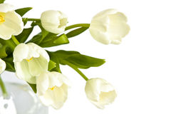 Beautiful bouquet of white tulips. Beautiful bouquet of tulips in glass vase on white background Stock Photography