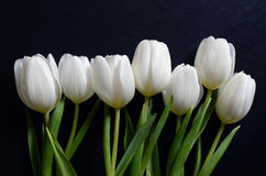 Beautiful bouquet of white tulips Stock Image