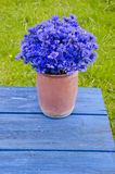 Beautiful bouquet wild cornflower in vase on old blue table Stock Photos
