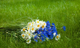 Beautiful bouquet wild flowers daisies and cornflowers royalty free stock photography