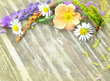 Beautiful bouquet of wildflowers from Carpathian Valleys royalty free stock image