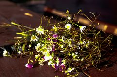 Summer wildflowers on the table royalty free stock images