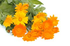 Beautiful bouquet of yellow calendula flowers isolated Stock Images