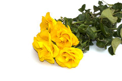 Beautiful bouquet of yellow roses on the isolated background Stock Photography