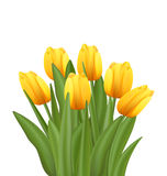 Beautiful Bouquet with Yellow Tulips Flowers. Illustration Beautiful Bouquet with Yellow Tulips Flowers Isolated on White Background - Vector royalty free illustration