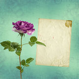 Beautiful bouquets of roses on pastel background Royalty Free Stock Image