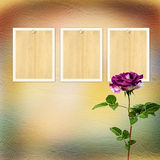 Beautiful bouquets of roses on pastel background Stock Image