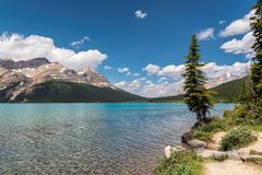 Beautiful Bow lake in Rocky Mountains, Canada. Beautiful turquoise waters of the Bow Lake with snow-covered peaks above it in Rocky Mountains, Banff National royalty free stock photography