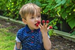Beautiful boy eating raspberries. Beautiful boy picking and eating raspberries Royalty Free Stock Photos