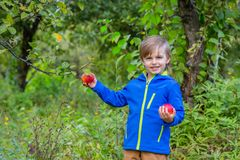 Beautiful boy with an organic apple in the garden. royalty free stock photos