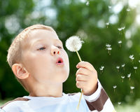 Beautiful Boy in the park blowing on dandelion Stock Image